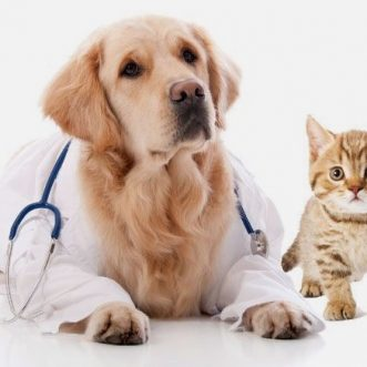 Is Pet Insurance Worth It?
