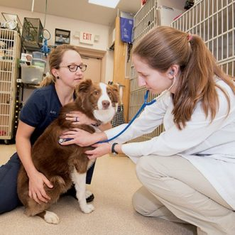 Choosing the Perfect Veterinarian for Your Furry Friend