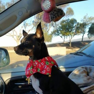 Avoiding Car Anxiety in Pets