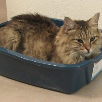 Biggest Mistakes People Make with Their Cat Litterboxes