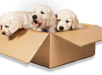 Moving with Pets: A How-To