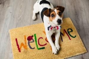 Finding Pet-Friendly Housing
